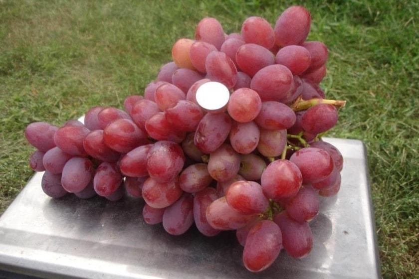 Виноград Анюта на весах