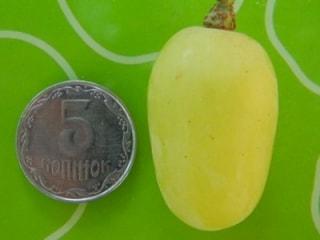 Ягода винограда Ландыш