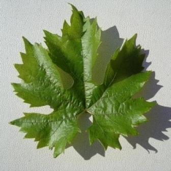Лист винограда Ливия
