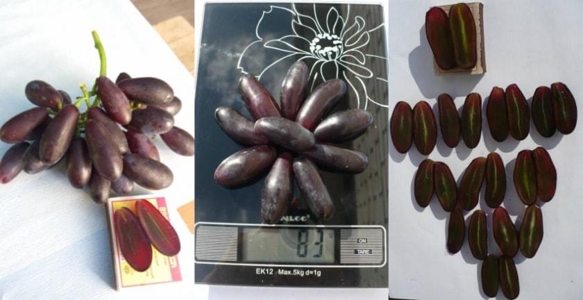 Ягода винограда Яся