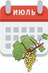Мероприятия по уходу за виноградником в июле