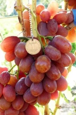 Виноград Красная планета