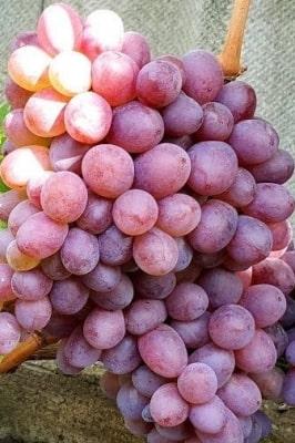 Виноград Сказка