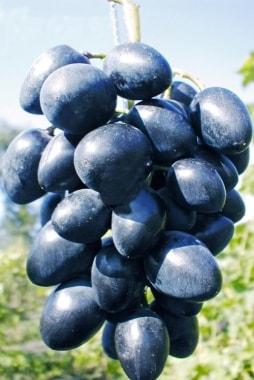 Виноград Наталья
