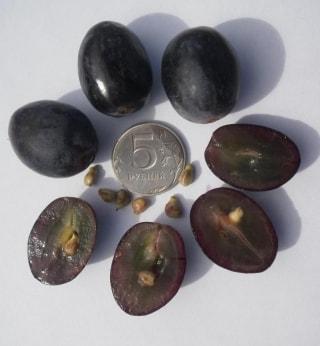 Ягода винограда Руслан