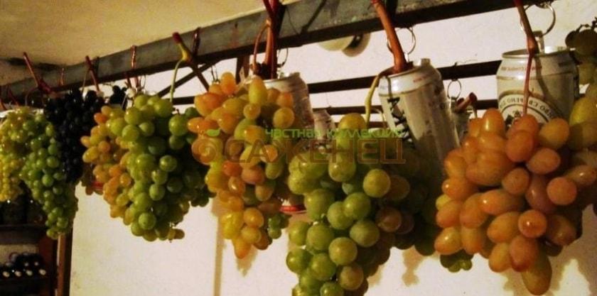 Хранение винограда на сухих гребнях