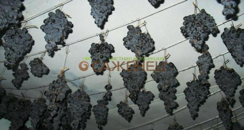 Подвешенные грозди винограда