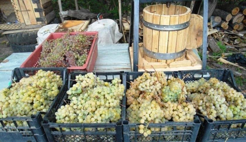 Изготовления вина