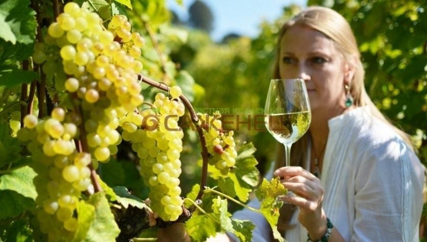 вино Бианка