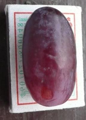 Ягода винограда Ризамат