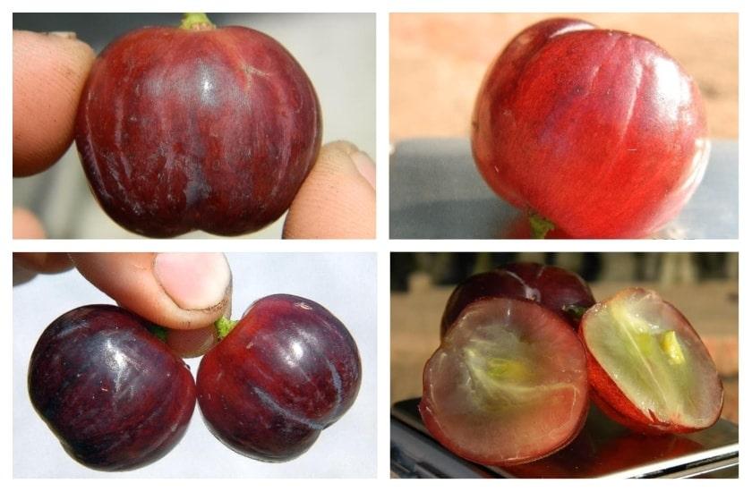 Памяти Буйненко ягода