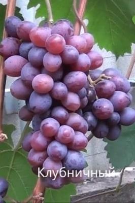 Виноград Клубничный