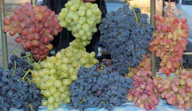 Выбираем сорта винограда
