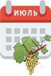 Уход за виноградом в июле