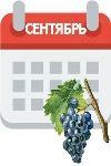 Работы на винограднике в сентябре